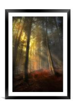 The rays of autumn, Framed Mounted Print