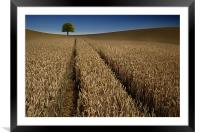 Tree in a sea of wheat, Framed Mounted Print
