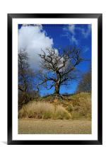 Tree on the Orwell, Framed Mounted Print