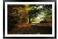 Epping Forest in Autumn, Framed Mounted Print