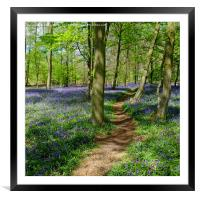 Pathway through the Bluebells, Framed Mounted Print