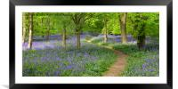 English Bluebell Wood, Framed Mounted Print