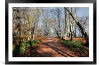 Epping Forest , Framed Mounted Print