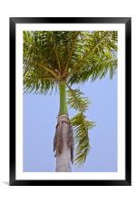 Tropical Royal Palm abstract, Framed Mounted Print