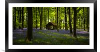Bluebell Wood in the spring, Hampshire, England, Framed Mounted Print
