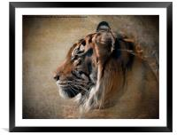 Tiger Portrait, Framed Mounted Print