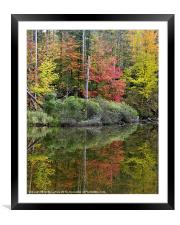 Pond Autumn Reflections, Framed Mounted Print