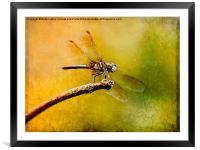 Waiting For My Date, Framed Mounted Print