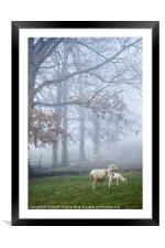 Winter Lamb and Ewe Foggy Day, Framed Mounted Print