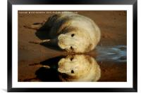 Reflecting on life...., Framed Mounted Print