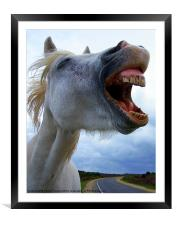 A laughing,white horse, Framed Mounted Print