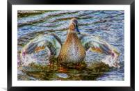 Lady Duck, Framed Mounted Print