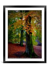 color of fall, Framed Mounted Print