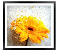 yellow flora , Framed Mounted Print