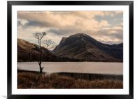 The tree, Buttermere, Framed Mounted Print