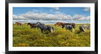 Dartmoor Ponies, Framed Mounted Print