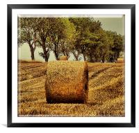 Hay Roll, Framed Mounted Print
