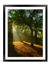 Light Rays in the Park, Framed Mounted Print