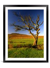Dead Tree on Dartmoor, Framed Mounted Print