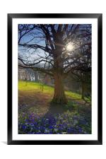 Springtime in Sheffield, Framed Mounted Print