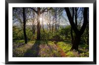 Bluebell Sunrise, Framed Mounted Print