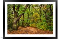 Ecclesall Woods in Autumn                         , Framed Mounted Print