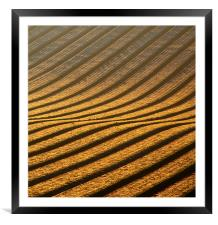 Field of Gold, Framed Mounted Print