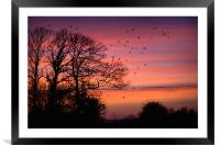 Home to Roost, Framed Mounted Print