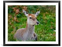 Keeping Watch, Framed Mounted Print