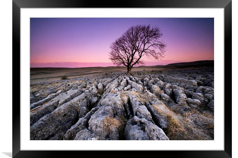 Buy Framed Mounted Prints of The Lone Tree by Gary Mather