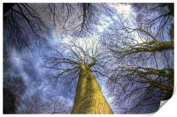 Blue sky and trees, Print