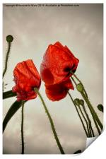 Poppies In The Sky, Print