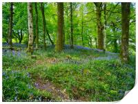 Bluebell Woods near Ambleside , Print