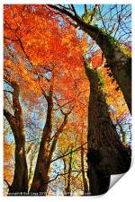 Autumn Trees, Print