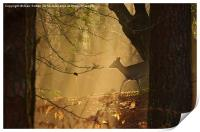 New Forest Sika Deer, Print