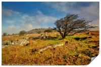 Stowes Hill and wind blown tree on Bodmin Moor, Print