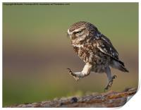 Little Owl late for work, Print