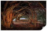 1000 year old yew tree at Aberglasney gardens, Print
