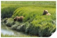 Two Brown Bear Cubs in a Meadow of Variegated Gree, Print