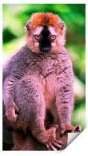 JST2802 Red-fronted Lemur, Print