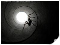 Spider in a Tunnel, Print