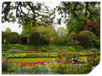 Spring layers of tulips and paths at Chenies., Print