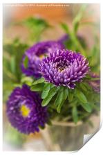 Aster in a vase, Print