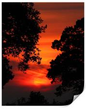 Sunset Between The trees, Print