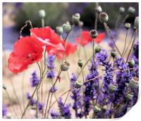 Poppies and Lavender, Print
