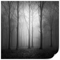 Woodland In The Fog, Print