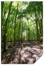 Eastham Country Park, Print