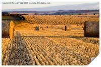 Straw Bales at Dawn, Print