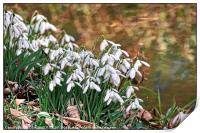 """""""Snowdrops by the stream"""", Print"""