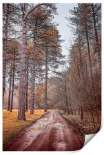 Path in a Woods, Print